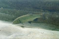 Lago_47